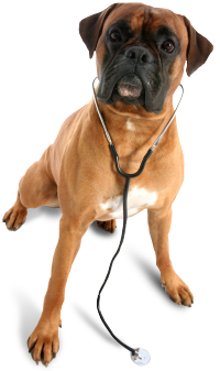 timber_view_veterinarian_dog.png